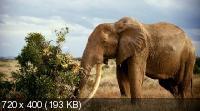 IMAX: Рожденные на воле / IMAX: Born to Be Wild (2011) BDRip 1080/720p + HDRip