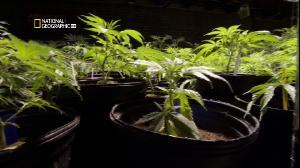 Супертрава / Inside: Marijuana (2010/SATRip/HDTV 1080i)